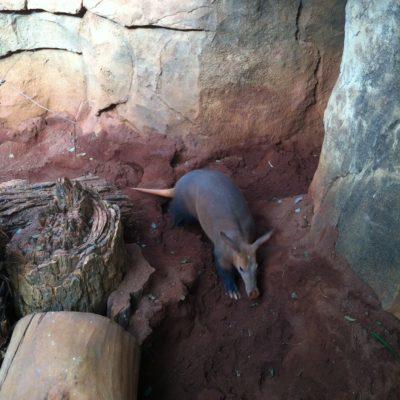 ¿Sabeis cómo se llama este animal que encontramos en el zoo de Chicago?