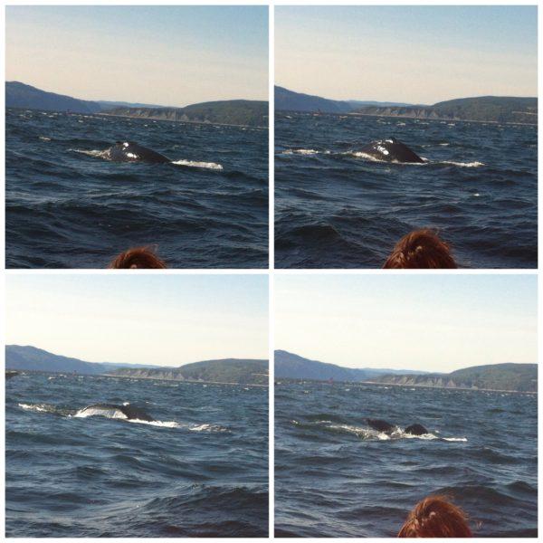 ¡Una ballena!