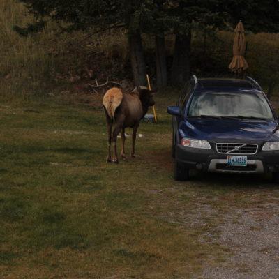 También vimos unos cuantos ciervos sueltos pastando
