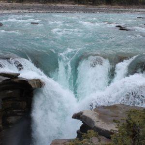 Aunque vimos bastante agua en la cascada Athabasca, se veía que el río no llevaba su mayor caudal