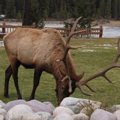 Aquí también había ciervos por doquier