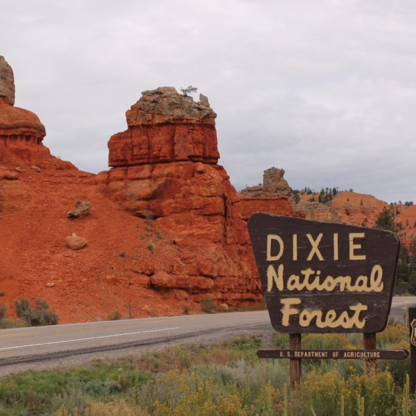 La entrada al Dixie National Forest