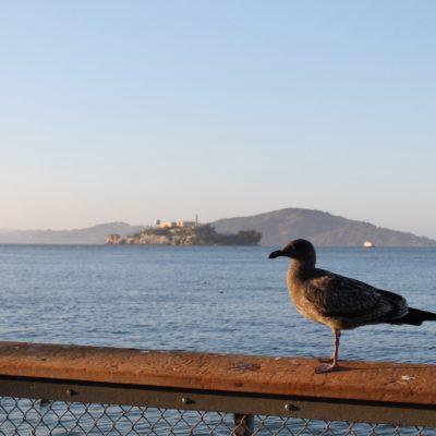 """La isla de Alcatraz desde los muelles. No nos dio tiempo a ir, ya que hubieramos """"perdido"""" más de medio día."""