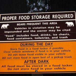 Como convivir con los osos es de vital importancia en Yellowstone