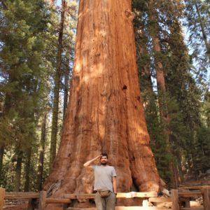 """El árbol más grande del mundo, el """"General Sherman"""""""