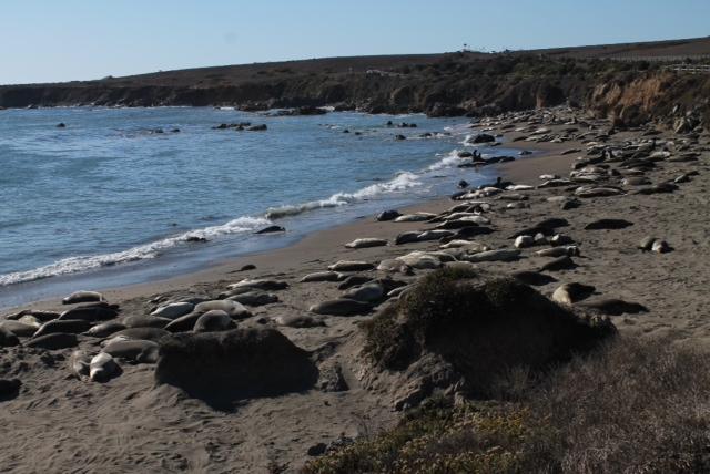 Un montón de leones marinos tumbados en la playa