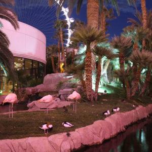 Flamencos en el jardín interior del Hotel Flamingo