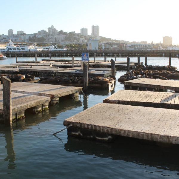 Montones de leones marinos al sol