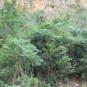 Un mono se dejó ver entre los árboles
