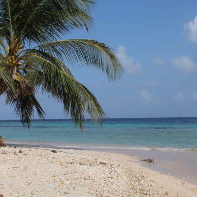 Incluso podíamos coger los cocos caídos de las palmeras (o treparlas) y beber su agua