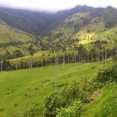 El Bosque de las Palmas fue la última sorpresa del recorrido, un paisaje precioso