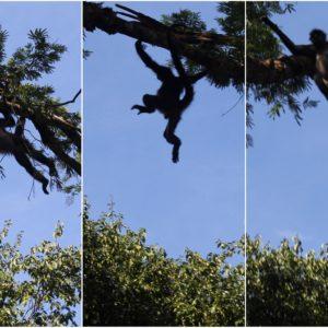 Aunque no se dejaban ver fácilmente, vimos a varios monos moviéndose entre las ramas
