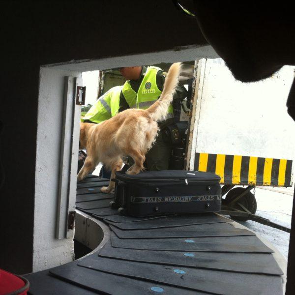 A la llegada un perro olisqueó todas y cada una de las maletas en busca de...
