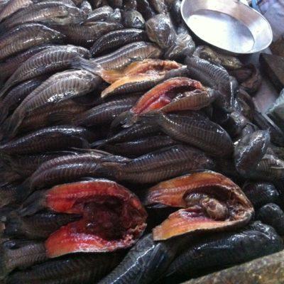 Nos llamó la atención la presentación de este pescado, el tamatá