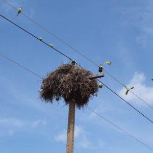 Este enorme nido tenía tantos pájaros en él, que su sonido era ensordecedor
