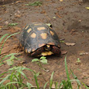 Esta tortuga no se atrevía a saludarnos