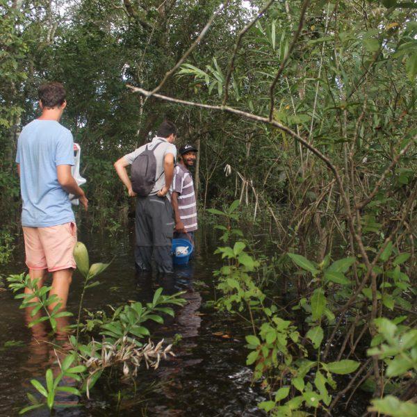 Paseo Pantanal
