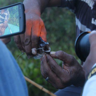 Probablemente fuera la boca de piraña más fotografiada del Pantanal... ¡Y qué dientes!