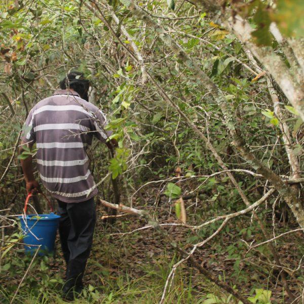El guía iba abriendo camino con su machete para intentar evitar las zonas más inundadas
