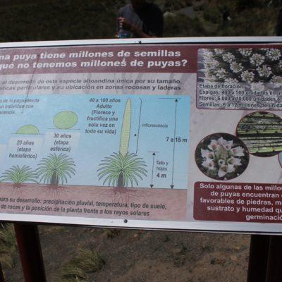Los datos que ofrece este panel sobre la puya raimondii nos parecen muy curiosos