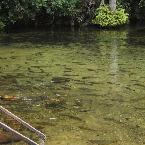 El Balneario Estivado tenía pinta de ser artificial, un pozo y unos peces que los habían puesto ellos a proposito