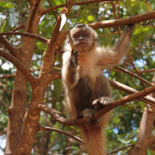 Nos encontramos muchos monos y además, de los que se acercaban mucho