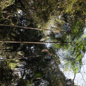 En el recorrido inicial pudimos ver las palmeras de los palmitos (comida típica brasileña) y esta zona es de gran calidad