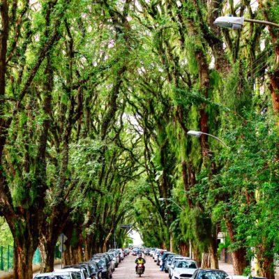 Aunque el arco de los árboles es hermoso, la calle más bonita del mundo sea un poco demasiado