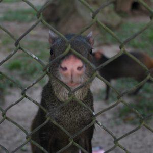 En el parque Paseo Público hay un pequeño zoo con unos pocos animales