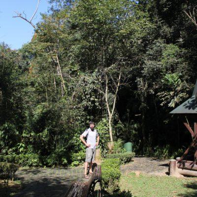 """En el Bosque Alemán hay un camino ambientado en la historia de """"Hansel y Gretel"""""""