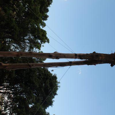 Con este tronco invertido un grupo ecologista quería llamar la atención sobre la cantidad de árboles que caen en São Paulo por falta de cuidados