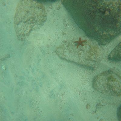 Vimos unas cuantas estrellas de mar bajo el agua