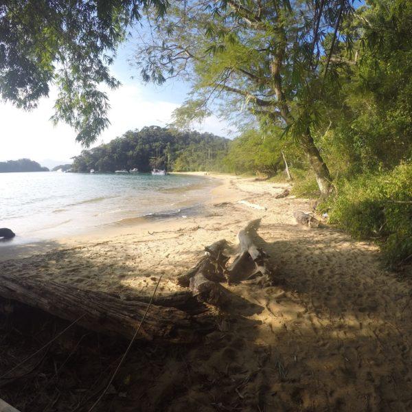 Playa y selva; naturaleza en estado puro