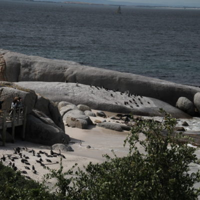 Pagando la entrada, es posible acercarse a esta playa llena de pingüinos