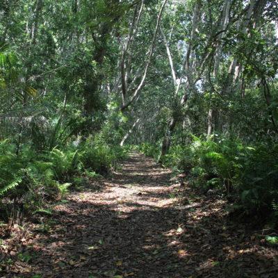 Recorrimos una pequeña parte del bosque Jozani con un guía