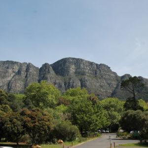 Detrás de Table Mountain se encuentra un gran jardín botánico que lamentablemente no tuvimos tiempo de visitar