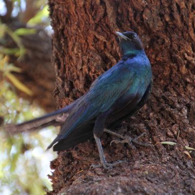 Este pájaro y sus colores nos tenían enamorados