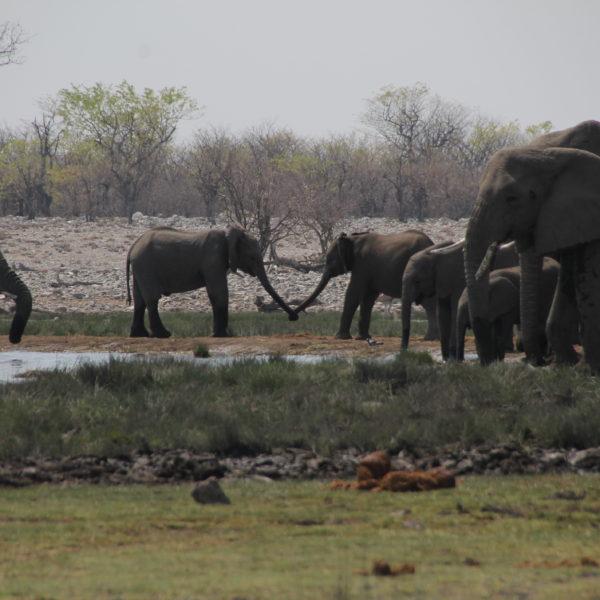 Los elefantes, juguetones y cariñosos, nos dejaron fotos tan bonitas como ésta