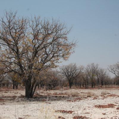 La vegetación de Etosha estaba totalmente seca, aunque de esta manera también tenía su encanto