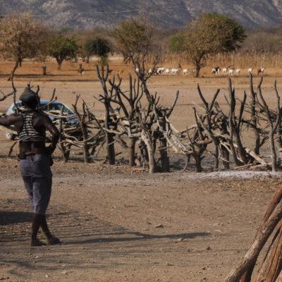El jefe de la tribu vigilando el pastor que controla el rebaño de oveja