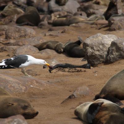Por desgracia, también vimos algún bebe de foca muerta
