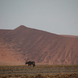La estampa del oryx con un paisaje tan particular nos pareció precioso