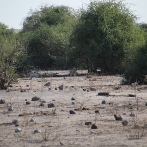 Un grupo de leonas descansando en la sombra