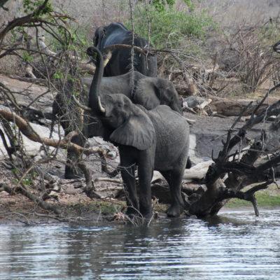Vimos elefantes al borde del rio al principio del recorrido