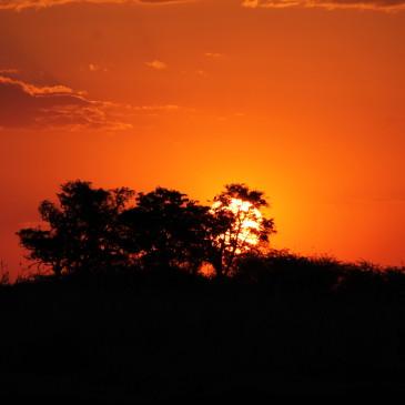Chobe, la vida entorno al río (días 419-421)