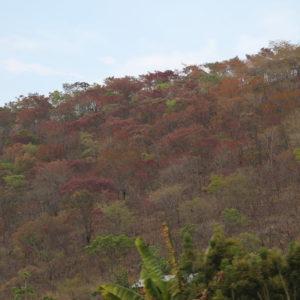 Los colores del otoño también estaban visibles en África