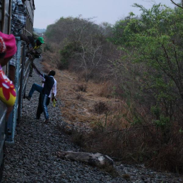 """Con ligeros movimientos del tren, consiguieron sacar a la pobre vaca decapitada de entre las """"ruedas"""""""