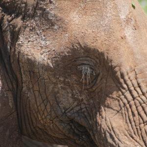 La longitud de pestañas de este elefante nos dejó alucinando