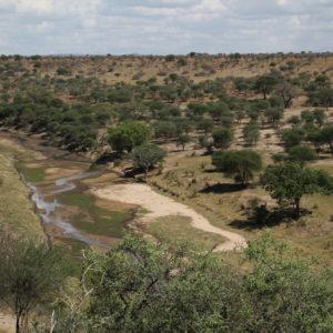 El paisaje de Tarangire nos gustó mucho, aunque los ríos estaban totalmente secos