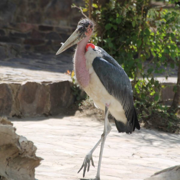 El pájaro más feo que hemos visto en todo el viaje
